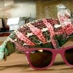 Ray-Ban rayban eyewear 2010 gözlük modelleri güneş gözlükleri